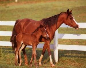 lån til hest